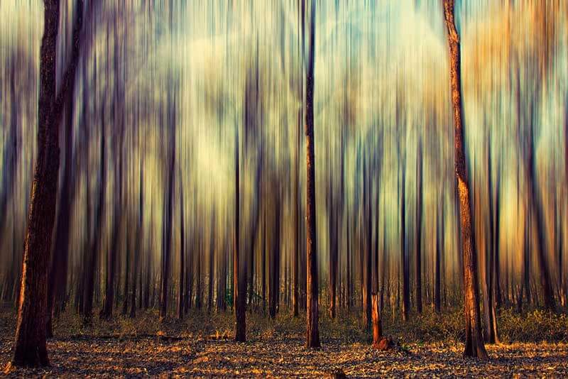 my_forest_dream_is_still_a_dream_JM_PS_OPT