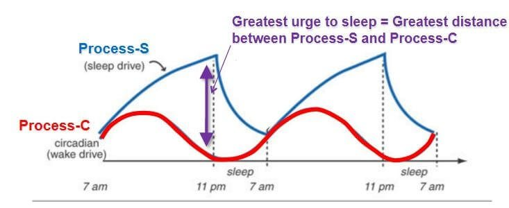 Two process model of sleep regulation